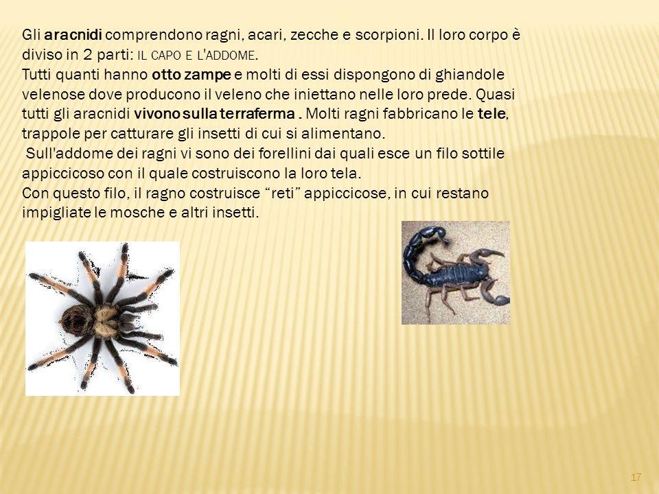 Gli aracnidi comprendono ragni, acari, zecche e scorpioni