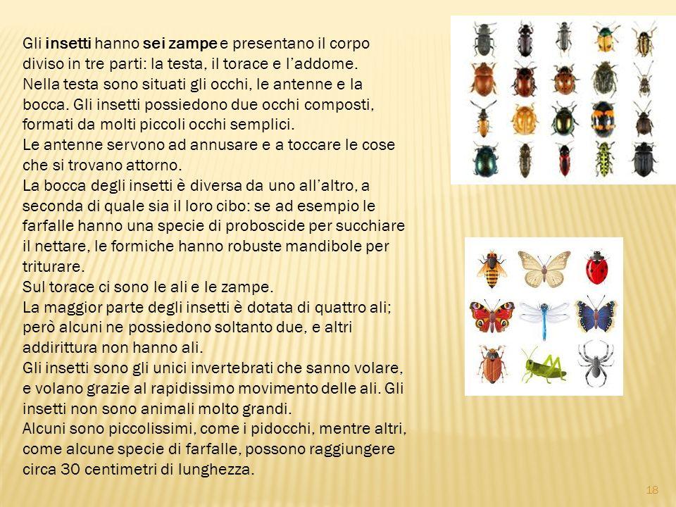 Gli insetti hanno sei zampe e presentano il corpo diviso in tre parti: la testa, il torace e l'addome.