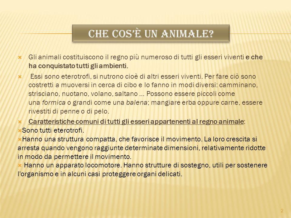 CHE COS'È UN ANIMALE Gli animali costituiscono il regno più numeroso di tutti gli esseri viventi e che ha conquistato tutti gli ambienti.