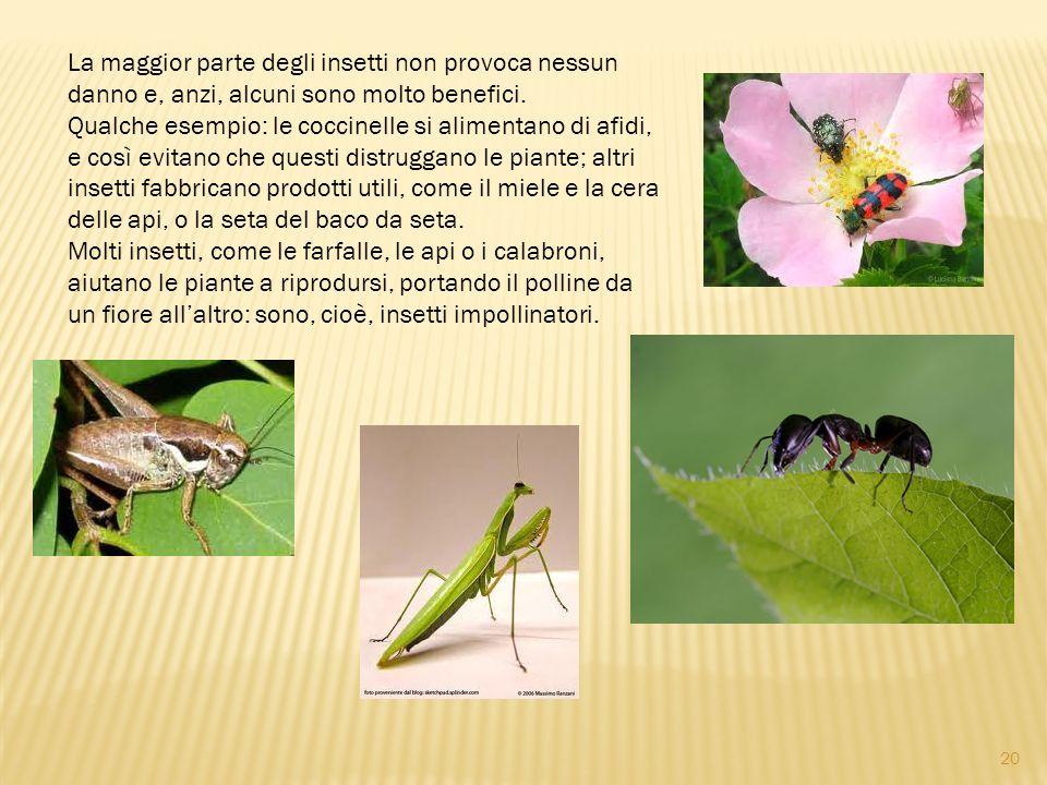La maggior parte degli insetti non provoca nessun danno e, anzi, alcuni sono molto benefici. Qualche esempio: le coccinelle si alimentano di afidi, e così evitano che questi distruggano le piante; altri insetti fabbricano prodotti utili, come il miele e la cera delle api, o la seta del baco da seta. Molti insetti, come le farfalle, le api o i calabroni, aiutano le piante a riprodursi, portando il polline da un fiore all'altro: sono, cioè, insetti impollinatori.