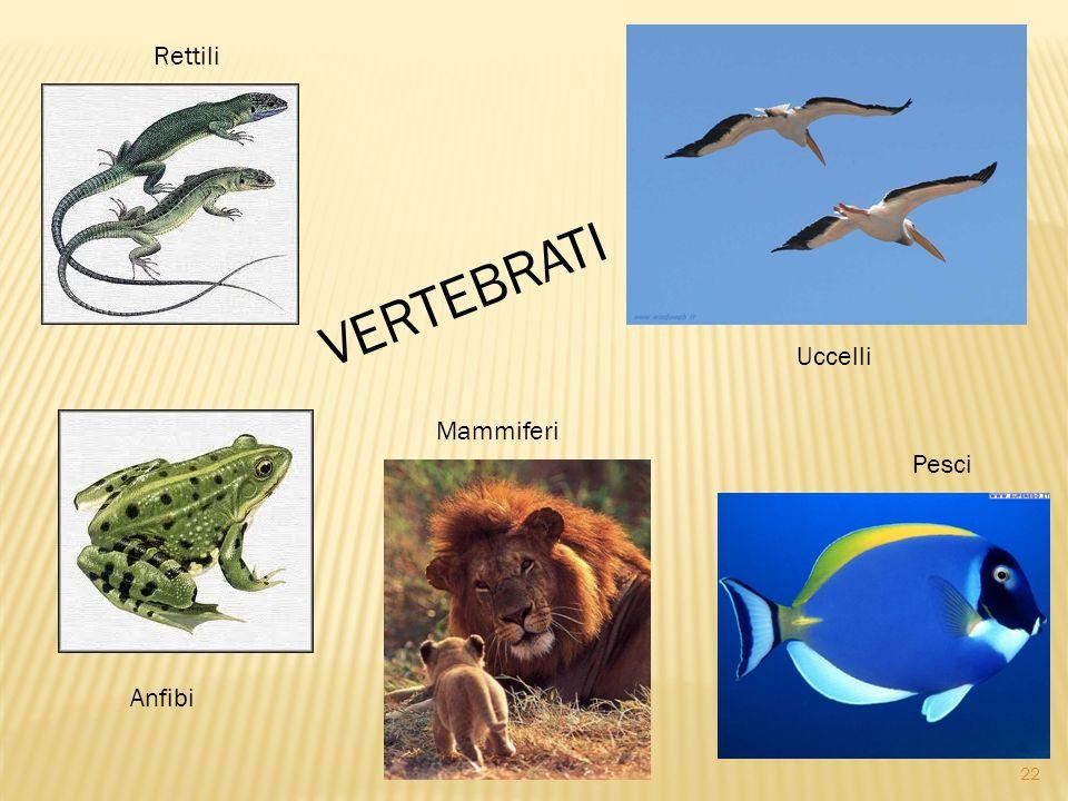 Rettili VERTEBRATI Uccelli Mammiferi Pesci Anfibi