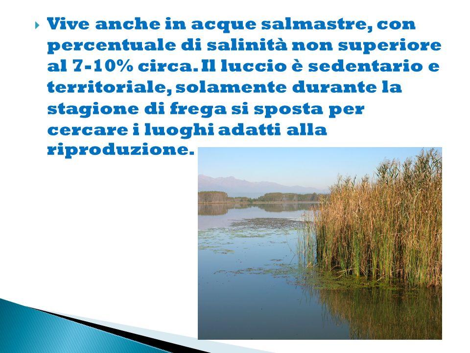 Vive anche in acque salmastre, con percentuale di salinità non superiore al 7-10% circa.