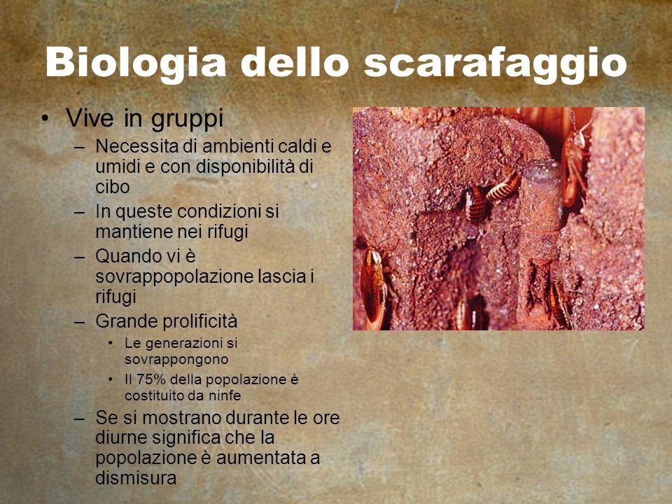 Biologia dello scarafaggio