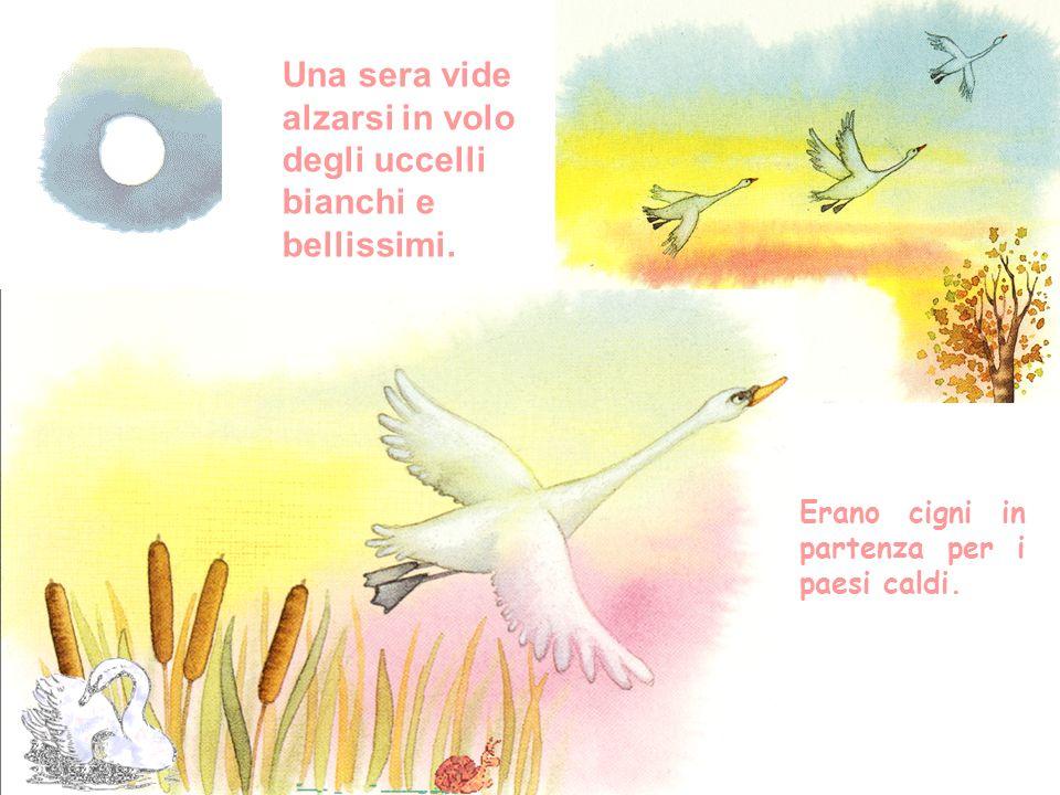 Una sera vide alzarsi in volo degli uccelli bianchi e bellissimi.