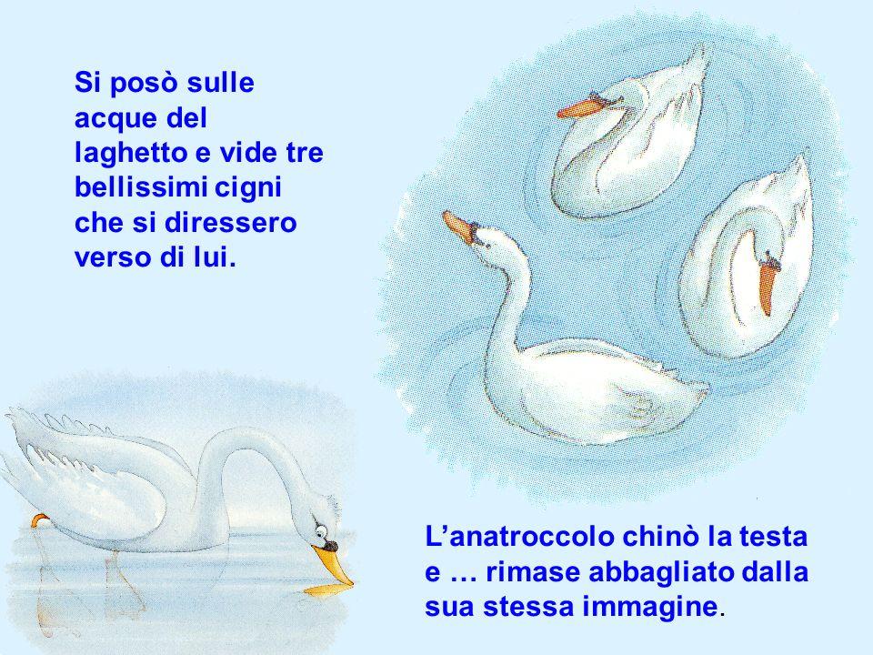 Si posò sulle acque del laghetto e vide tre bellissimi cigni che si diressero verso di lui.