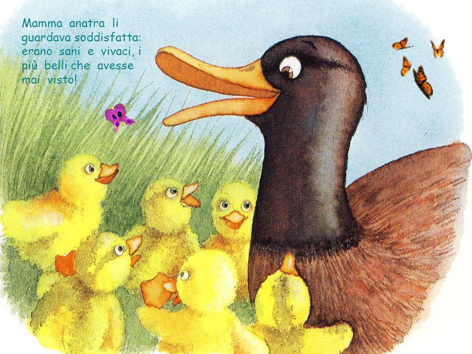 Mamma anatra li guardava soddisfatta: erano sani e vivaci, i più belli che avesse mai visto!