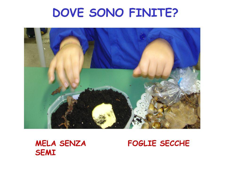 DOVE SONO FINITE MELA SENZA SEMI FOGLIE SECCHE