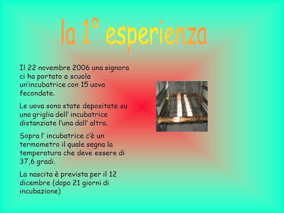 la 1° esperienza Il 22 novembre 2006 una signora ci ha portato a scuola un'incubatrice con 15 uova fecondate.