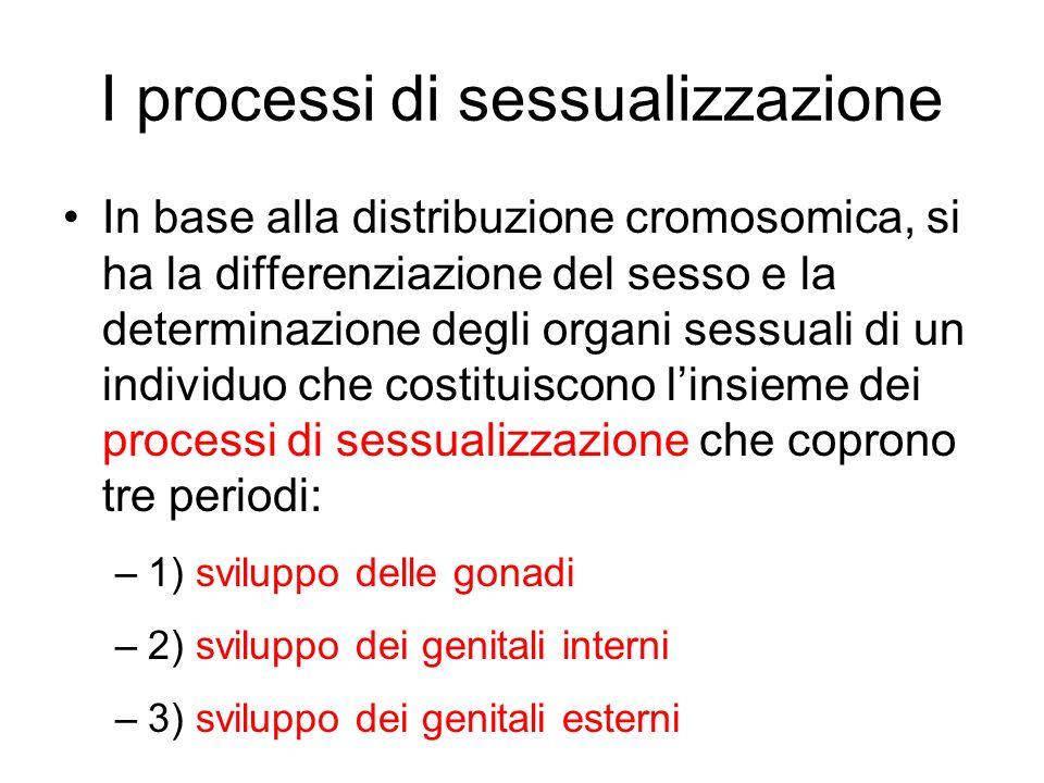 I processi di sessualizzazione