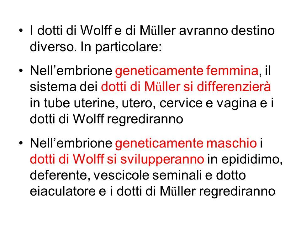 I dotti di Wolff e di Müller avranno destino diverso. In particolare:
