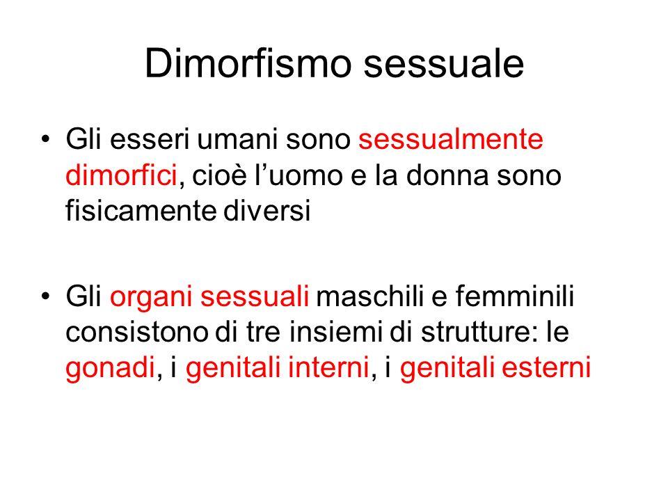 Dimorfismo sessuale Gli esseri umani sono sessualmente dimorfici, cioè l'uomo e la donna sono fisicamente diversi.