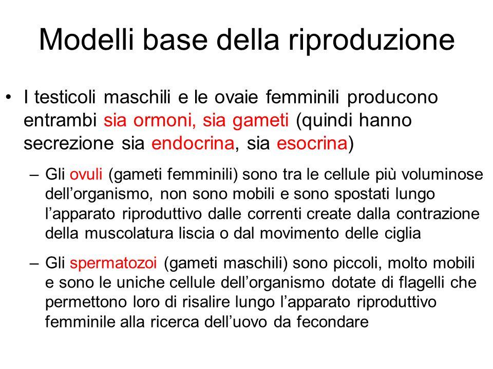 Modelli base della riproduzione