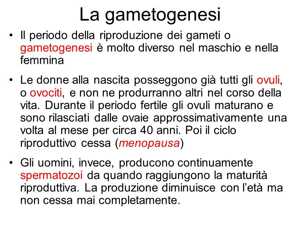 La gametogenesi Il periodo della riproduzione dei gameti o gametogenesi è molto diverso nel maschio e nella femmina.