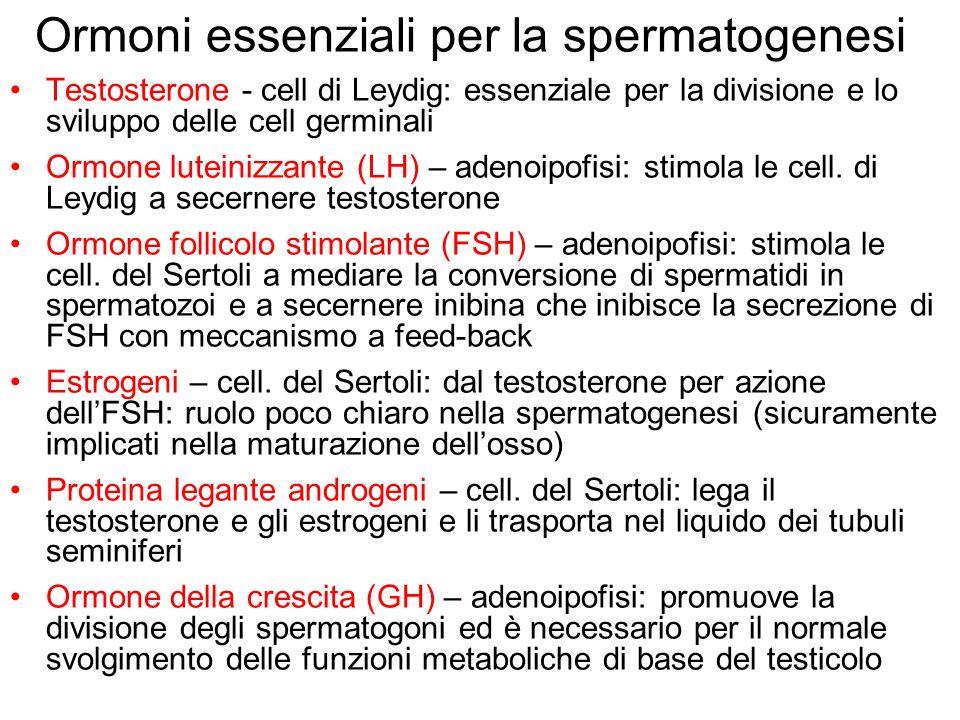 Ormoni essenziali per la spermatogenesi