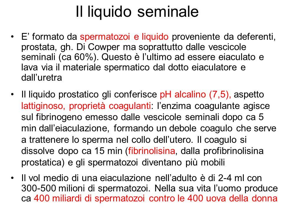 Il liquido seminale