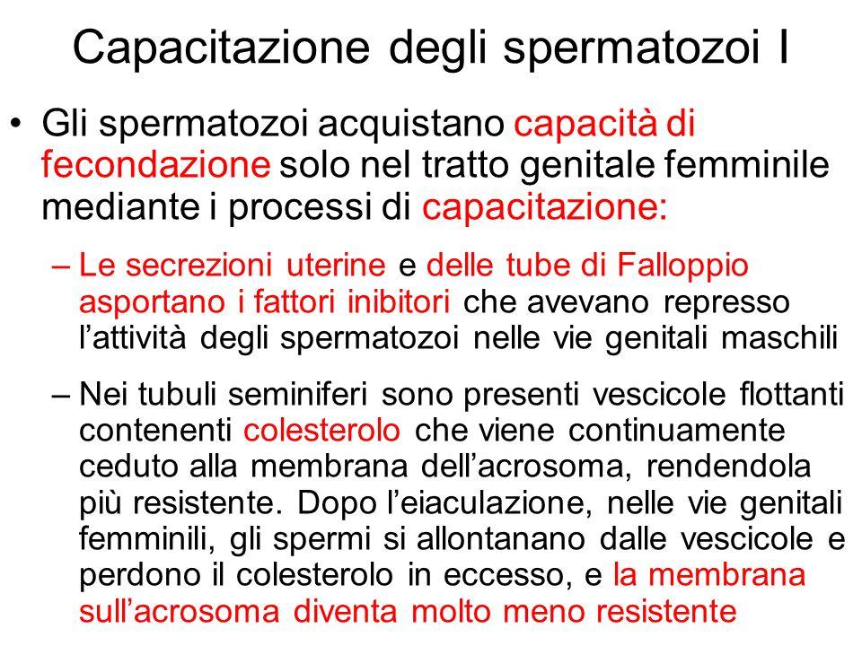 Capacitazione degli spermatozoi I