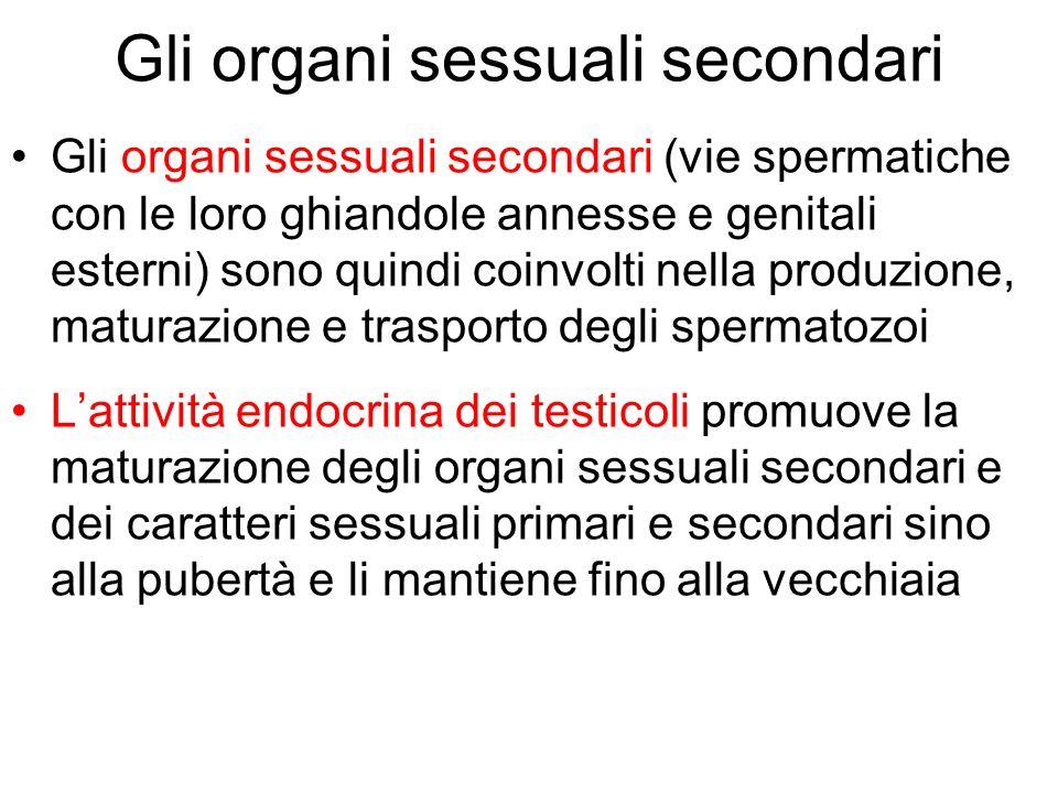 Gli organi sessuali secondari