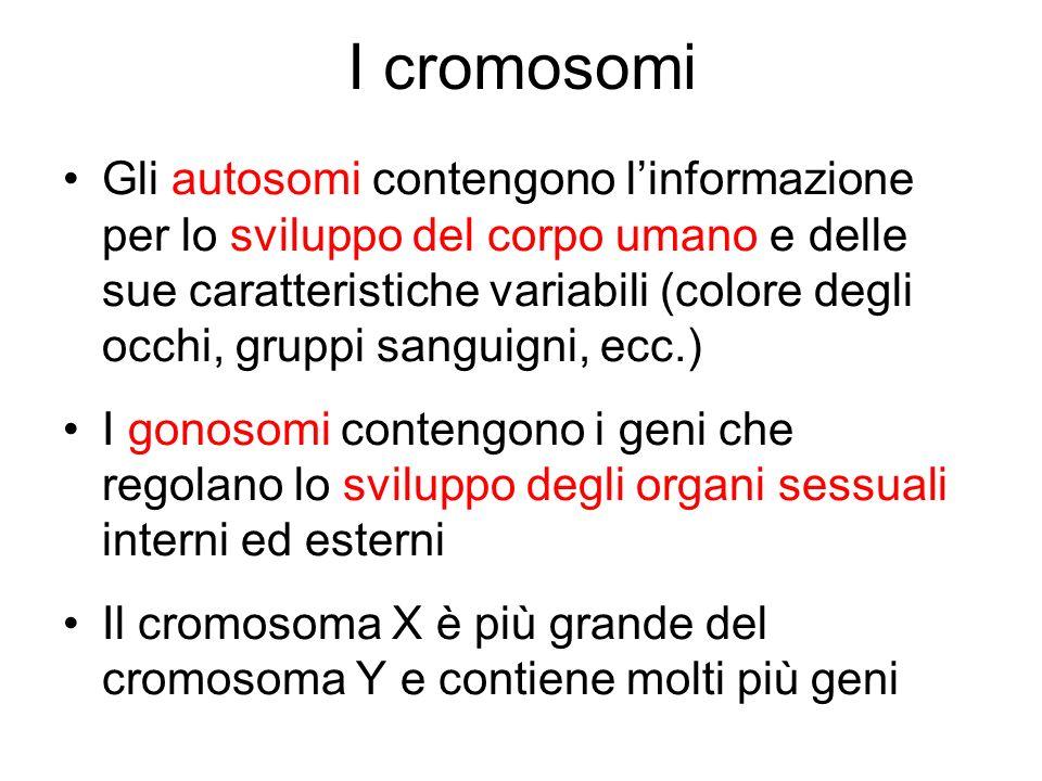 I cromosomi