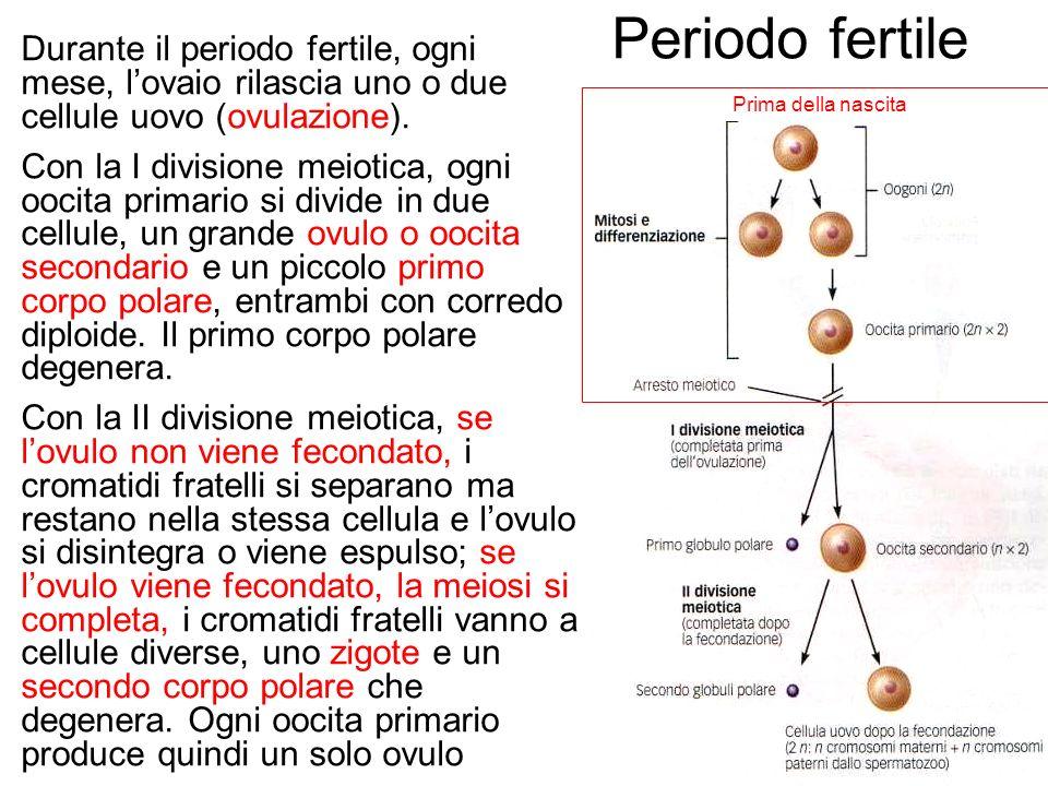 Periodo fertile Durante il periodo fertile, ogni mese, l'ovaio rilascia uno o due cellule uovo (ovulazione).