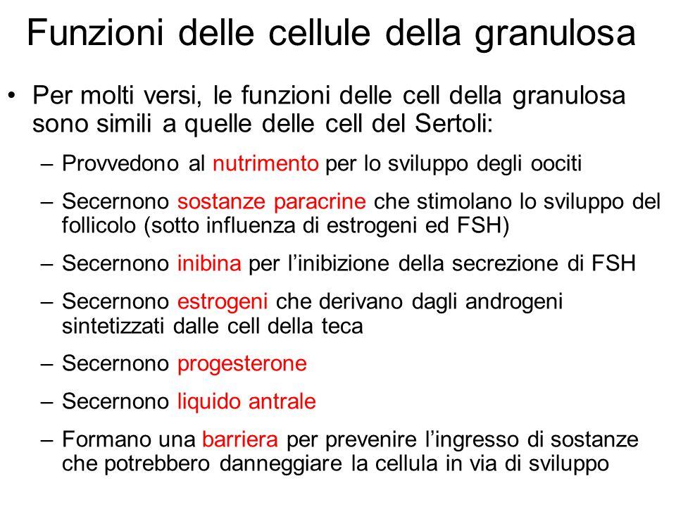 Funzioni delle cellule della granulosa