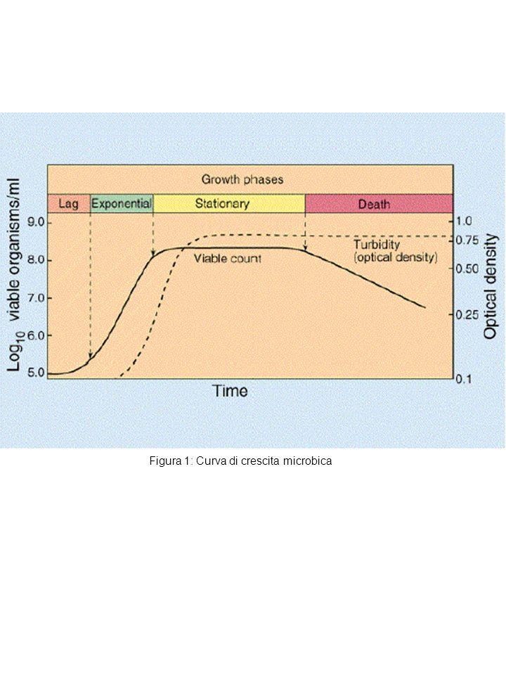 Figura 1: Curva di crescita microbica
