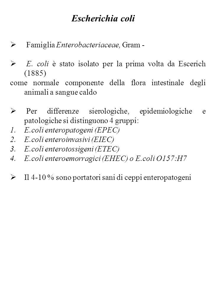 Escherichia coli Famiglia Enterobacteriaceae, Gram -