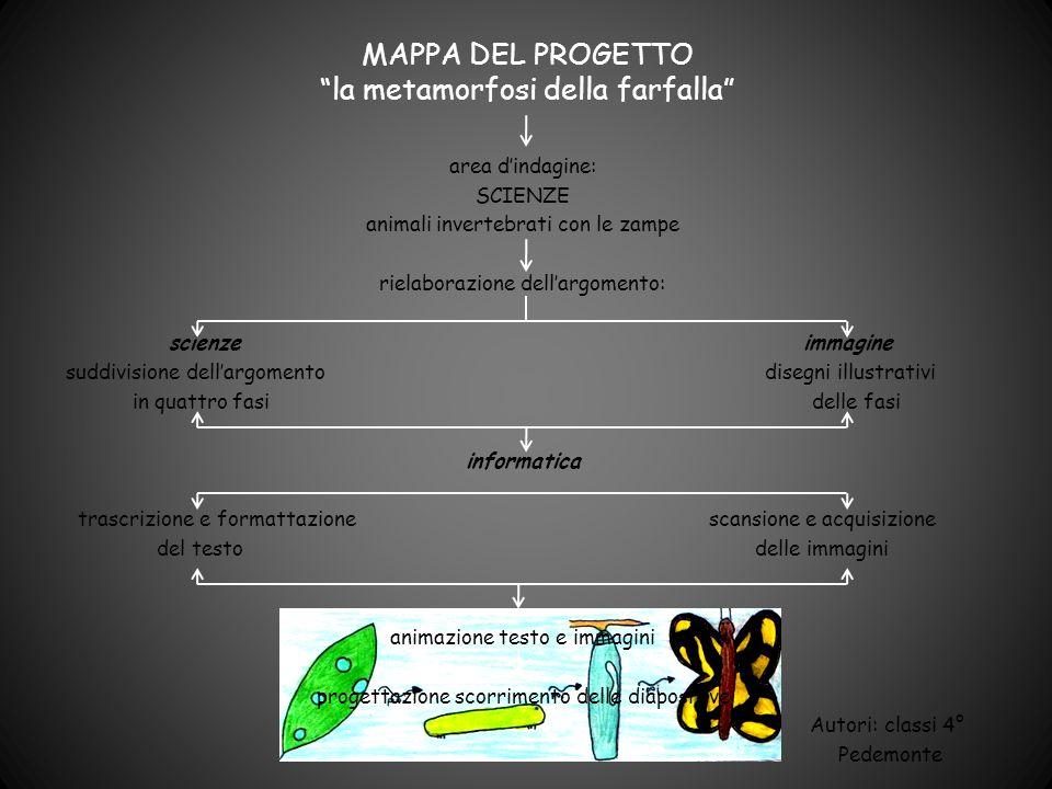 MAPPA DEL PROGETTO la metamorfosi della farfalla