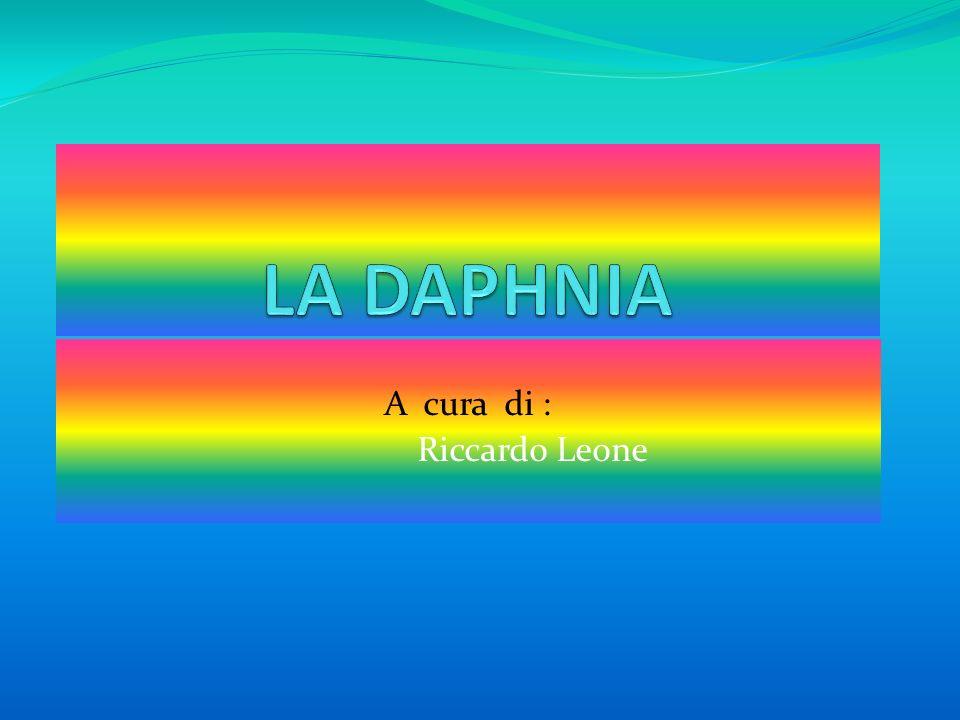 A cura di : Riccardo Leone