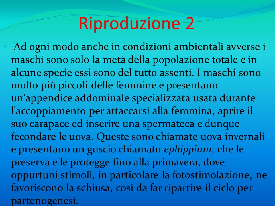 Riproduzione 2