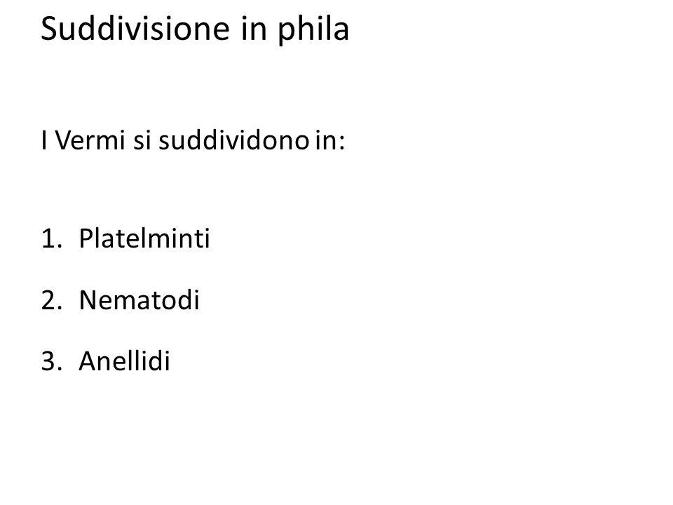 Suddivisione in phila I Vermi si suddividono in: Platelminti Nematodi