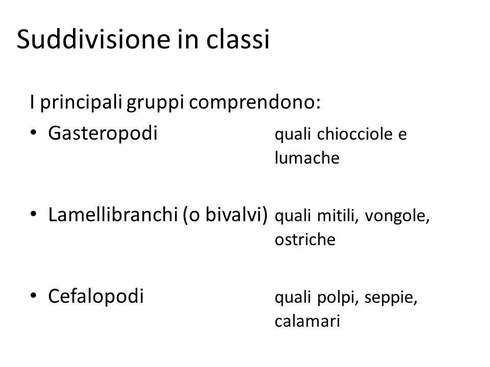 Suddivisione in classi
