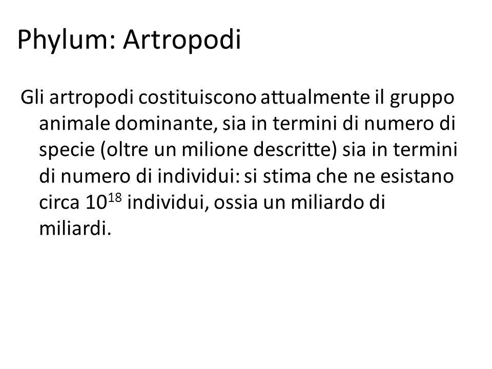 Phylum: Artropodi
