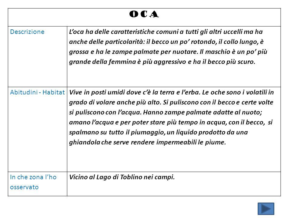 OCA Descrizione.