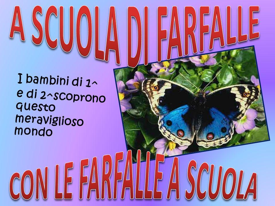 CON LE FARFALLE A SCUOLA