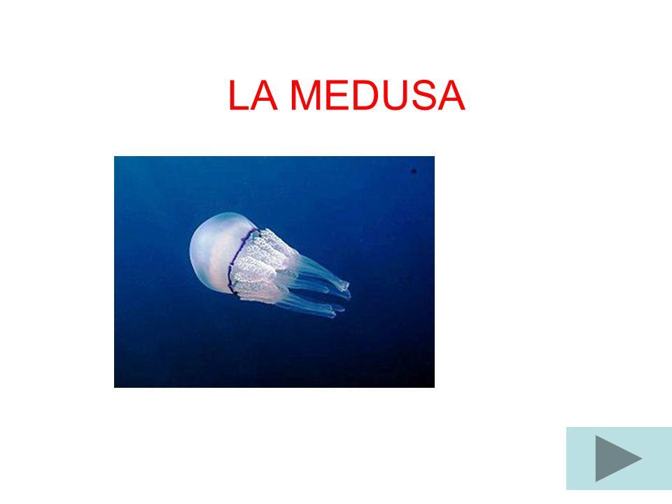 LA MEDUSA