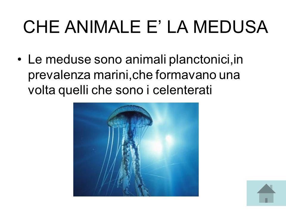 CHE ANIMALE E' LA MEDUSA