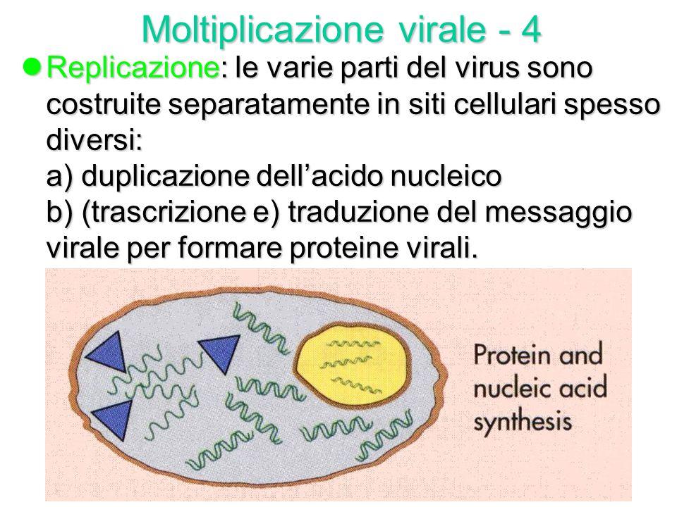 Moltiplicazione virale - 4