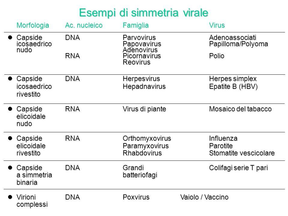 Esempi di simmetria virale