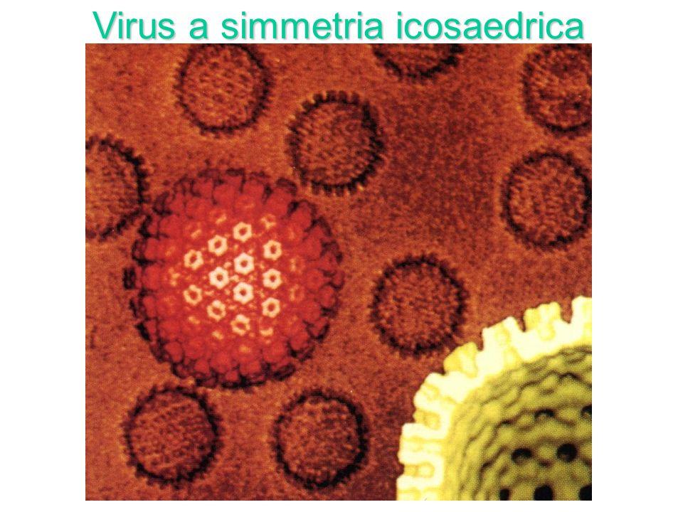 Virus a simmetria icosaedrica
