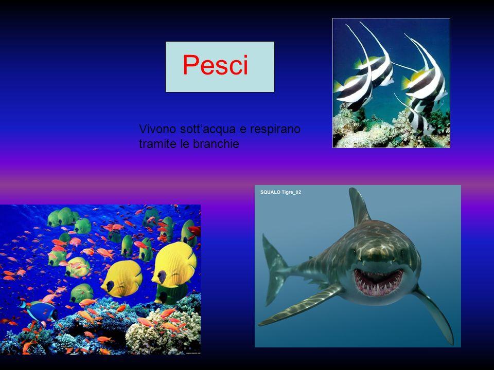 Pesci Vivono sott'acqua e respirano tramite le branchie