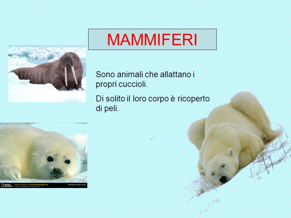 MAMMIFERI Sono animali che allattano i propri cuccioli.
