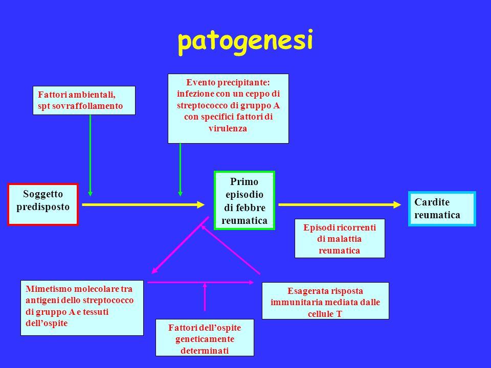 patogenesi Primo episodio di febbre reumatica Soggetto predisposto