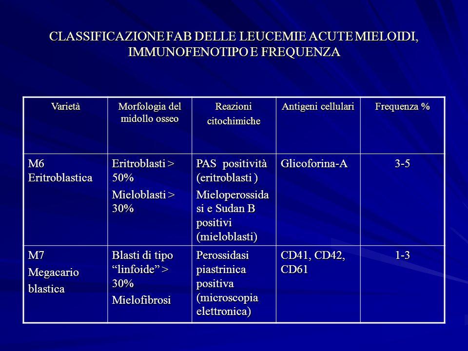 Morfologia del midollo osseo