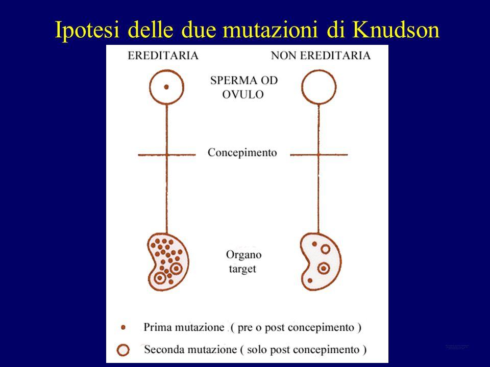 Ipotesi delle due mutazioni di Knudson