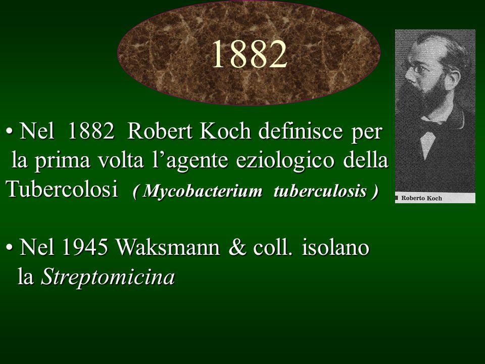 1882 Nel 1882 Robert Koch definisce per