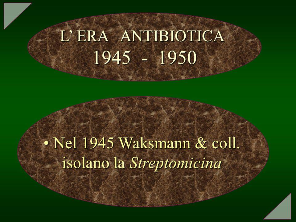 Nel 1945 Waksmann & coll. isolano la Streptomicina