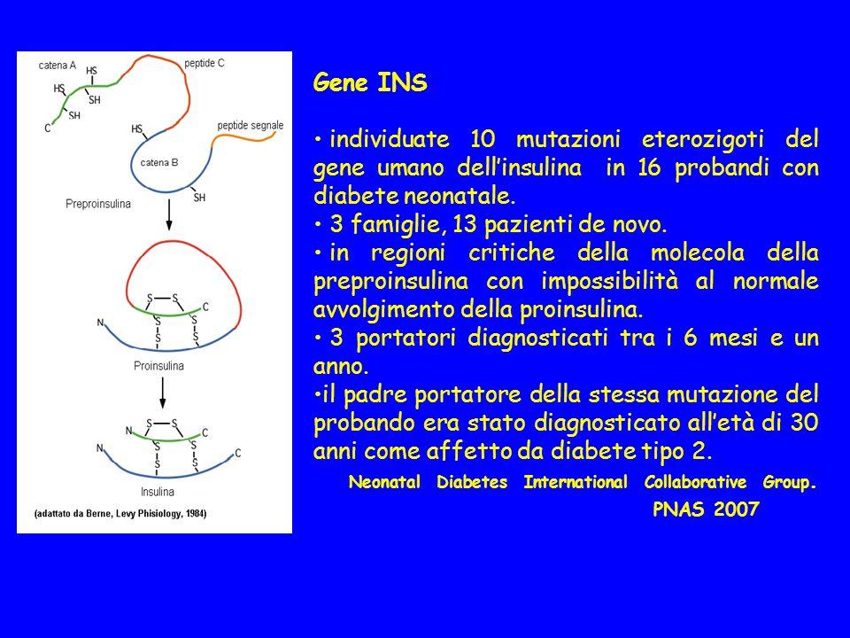 Gene INS individuate 10 mutazioni eterozigoti del gene umano dell'insulina in 16 probandi con diabete neonatale.