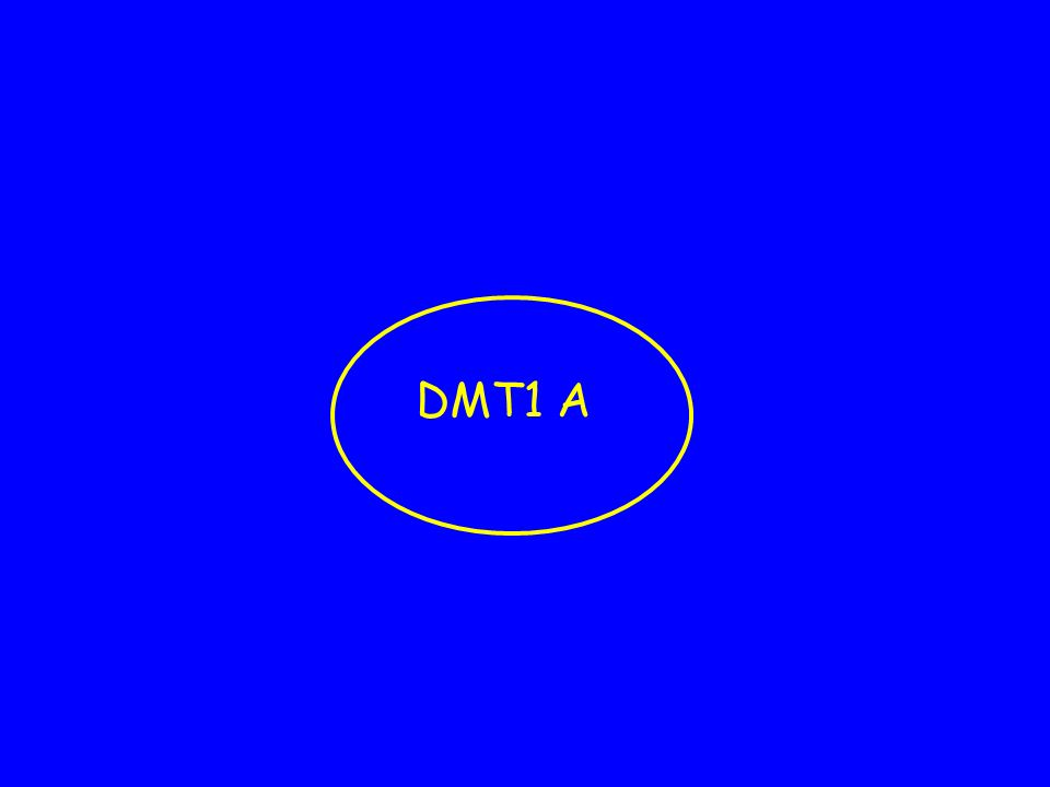 DMT1 A