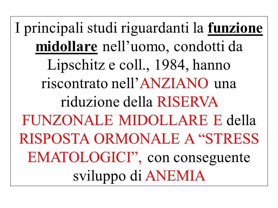 I principali studi riguardanti la funzione midollare nell'uomo, condotti da Lipschitz e coll., 1984, hanno riscontrato nell'ANZIANO una riduzione della RISERVA FUNZONALE MIDOLLARE E della RISPOSTA ORMONALE A STRESS EMATOLOGICI , con conseguente sviluppo di ANEMIA