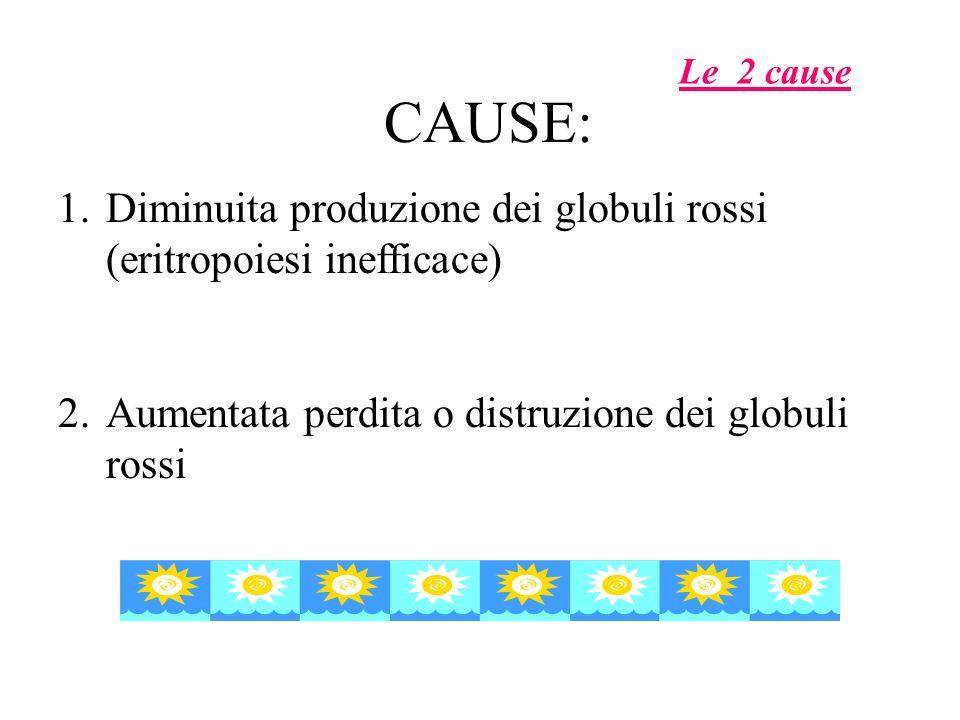 Le 2 cause CAUSE: Diminuita produzione dei globuli rossi (eritropoiesi inefficace) Aumentata perdita o distruzione dei globuli rossi.